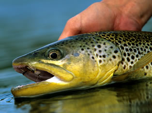 patagonia fly fishing trip