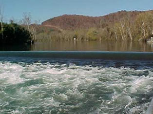 clinch river guide service