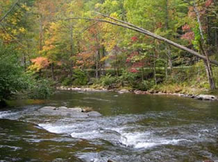 fly fishing the tellico river