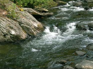 Tellico River Fly Fishing Guide Service