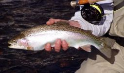 Hiwassee River Rainbow